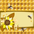 Background with bees, sunflowers and honeycomb