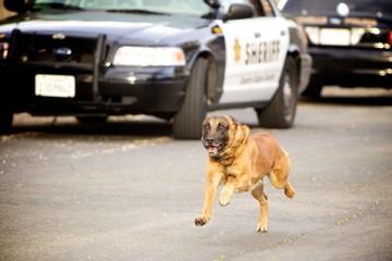 Running Police K9