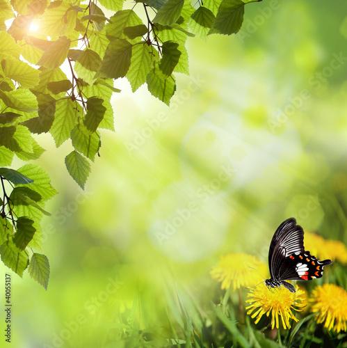 Miniaturka zdjęcia nr 40055137