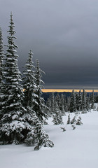Mt Rainier #5