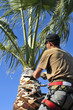 Palm Tree Specialist at Work