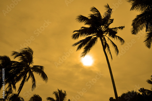 Silhouettes of Palm trees against the sun on a windy day