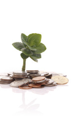 A young plant and coins, isolated on white