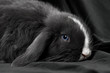 Kaninchen auf Samt