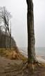 Bäume an der Ostseeküste