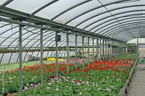 interior of a greenhouse for growing flowers