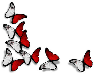 Maltese flag butterflies, isolated on white background