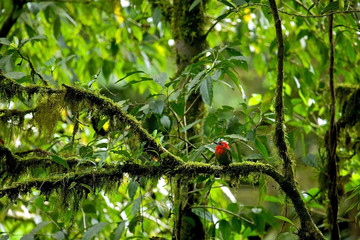 Red Tropical Bird
