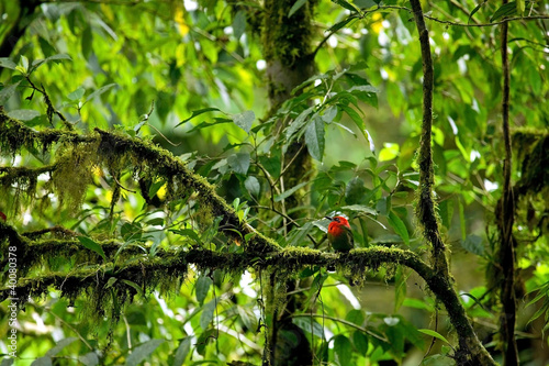 red-tropical-bird