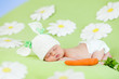 sleeping baby infant with a rabbit ears and  carrot among daisy