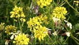 Sarı Yeşil Bitki poster