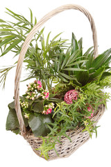 plants in the basket