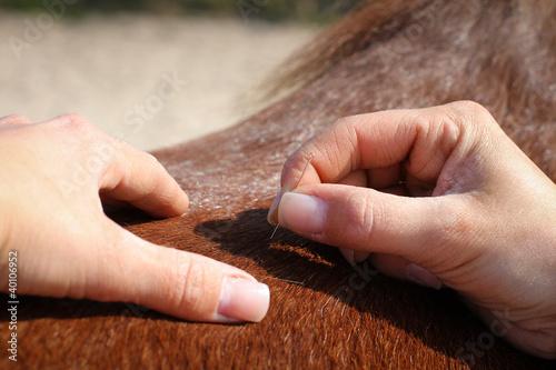 Leinwanddruck Bild Pferde - Akupunktur