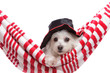 Adorable puppy wearing a hat