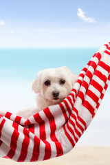 Cute puppy dog relaxing by the beach