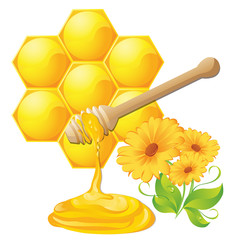 Honey dipper with bee honeycomb isolated