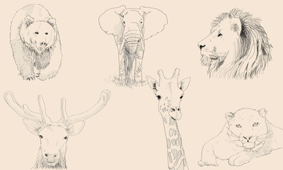 Animals Sketches