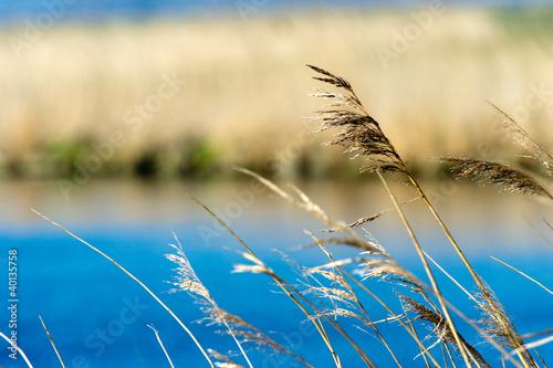 Grass near the water