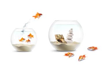 Compétition et Prise de risques