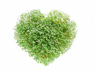 Watercress heart