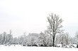 Snowy almost monochrome panorama