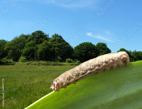 Caterpillar On Leaf With Countryside Background