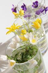 Drei Vasen: Buschwindröschen, Scharbockskraut, Waldveilchen