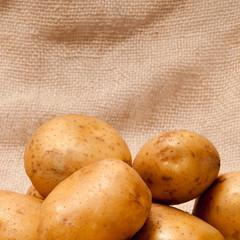 potato tubers
