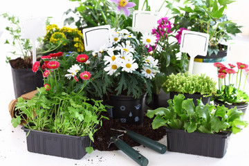 Decorative flowers and vegetable ready for planting