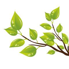 Branche de feuilles humides