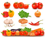 Color collection of vegetables and vegetable border.