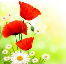 Fond de printemps avec coquelicot rouge et daisy. Vecteur