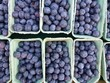 Blueberries in boxes at the greengrocer