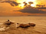 Fototapete Animals - Bottlenose - Meeressäuger