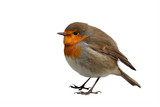 European Robin isolated on white background