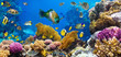 Coral colony and coral fish - 40190967