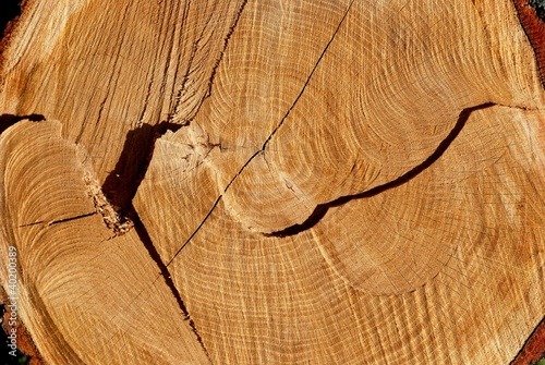 Texture of cut oak