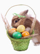 fance rabbit and easter basket