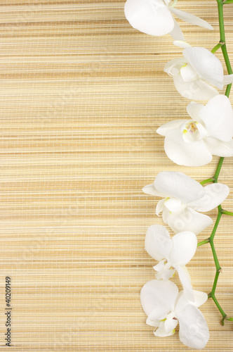 Fototapeta Orchid on mat
