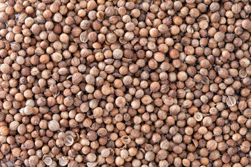 Coriander Seeds (Coriandrum sativum) texture background.
