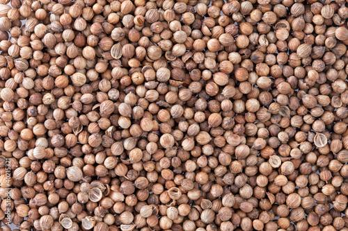 Coriander Seeds (Coriandrum sativum) texture background.