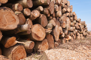 Close-up of stacked sawn trunks