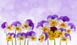 spring pansy flowers