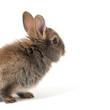 Kaninchen im Studio
