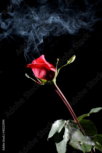 rose and smoke