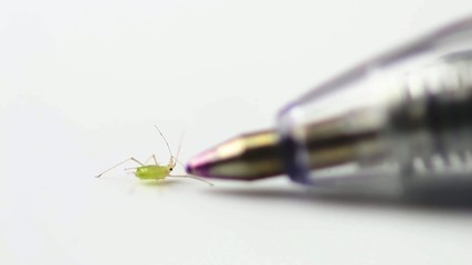 Aphid, Greenfly - walk behind pen