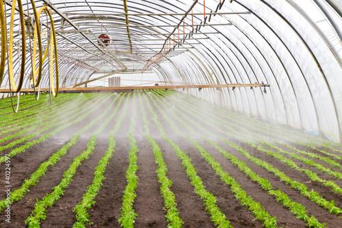 Gewächshaus mit Bewässerungsanlage