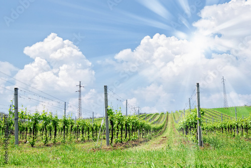 cloudy sky with sun over vineyard
