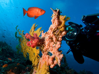 Underwater photographer by coral reef