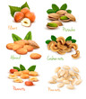 Big collection of ripe nuts. Vector